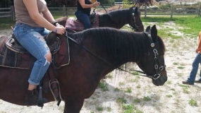 Horse Trail Ride (12)