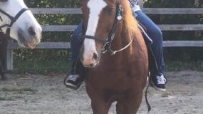 Horse Trail Ride (23)