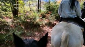 Horse Trail Ride (24)