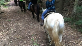 Horse Trail Ride (6)