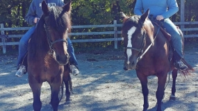 Horse Trail Ride (9)