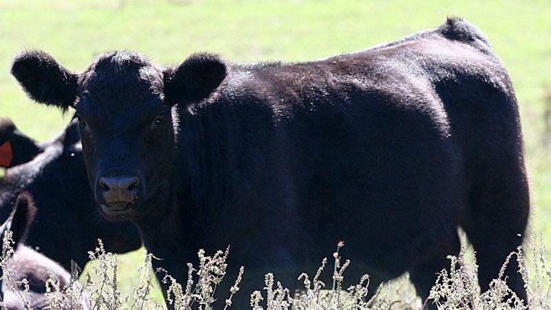 Livestock Share