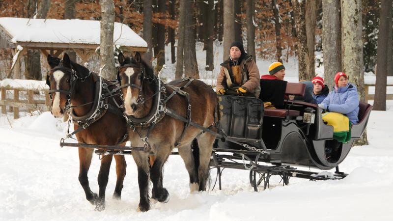 Vis a Vis sleigh