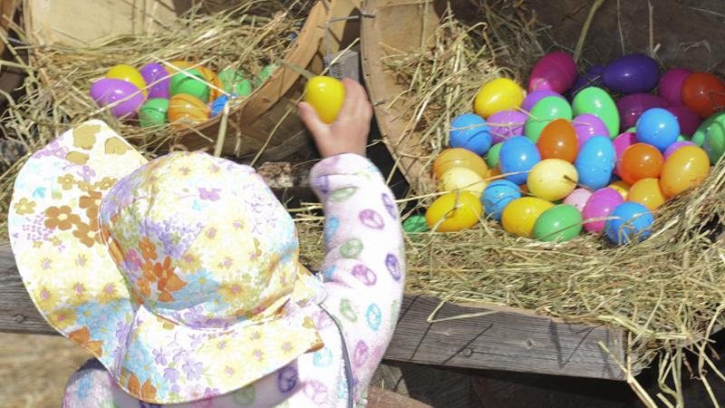 Egg Citing Egg