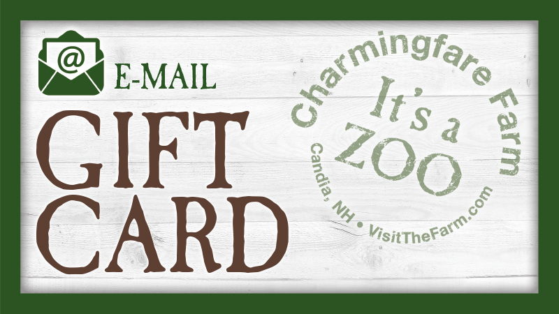 Email Gift Card