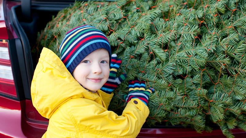 Christmas Tree Spree