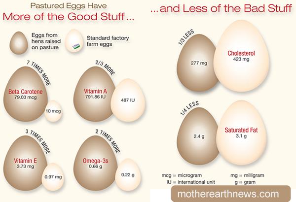 Eggs CSA