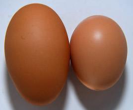 eggsizecompare