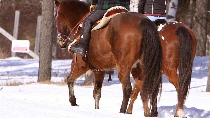 Horse Trail Rides