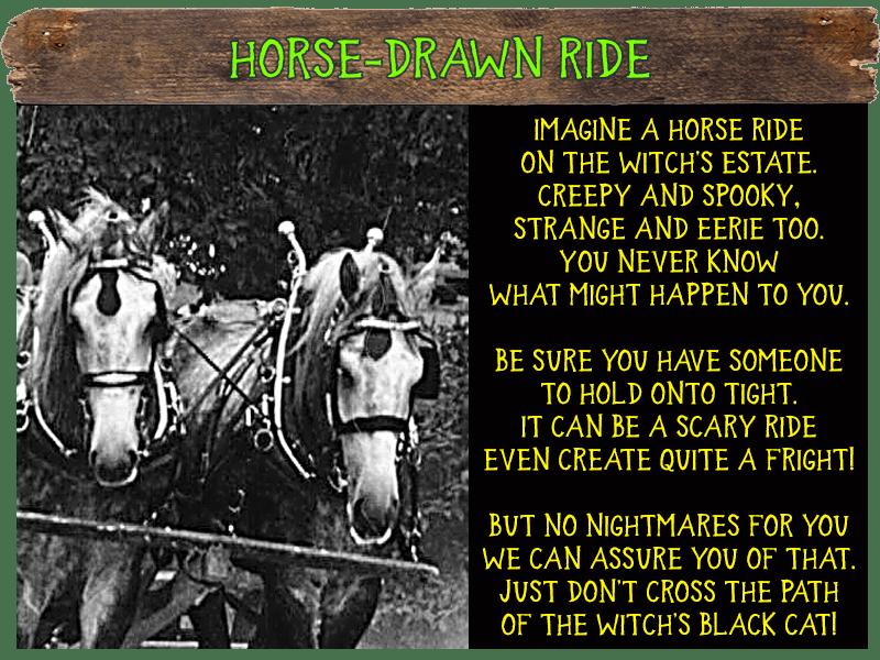 Horse Drawn Ride